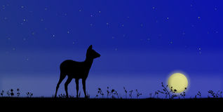 Deer on the filed,at night Stock Image