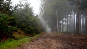 Deer in a fog on a forest path. stock footage