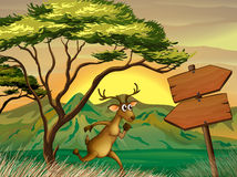 A deer following the wooden arrowboard Stock Photos
