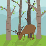 Deer in forest. Landscape background with deer foraging in the forest Royalty Free Stock Photos