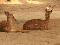 Deer in the forest stock video footage