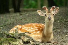 Deer in forest Stock Photos