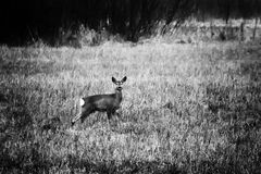 Deer forest stock image