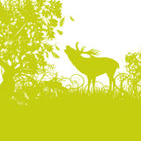 Deer in the forest near the rutting. Deer in the green forest near the rutting Stock Image