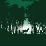 Deer in the forest at night. Deer in the spruce forest at night Royalty Free Stock Image