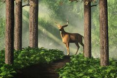 Deer on a Forest Path. A white-tailed deer stands on a thing forest path that winds through dense green trees. Sunlight filters down through the forest canopy to royalty free illustration