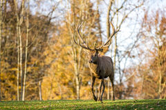 Deer. Forest power forest hunting Stock Images