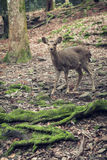 Deer in the forest. Deer stand in the forest instragram style photo Royalty Free Stock Images