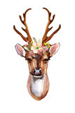 Deer - Front View. Watercolor deer head with flowers, leaves and herbs - front view. Hand painted illustration Stock Photo