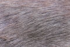 Deer fur gradient skin Stock Images