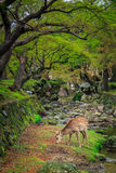 Deer in the garden Stock Image