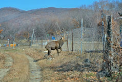 Deer on garden Stock Photos