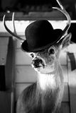 Deer Gentleman. Deer head wearing a gentleman's hat stock photo