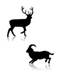 Deer and got. Silhouettes,shapes Stock Images