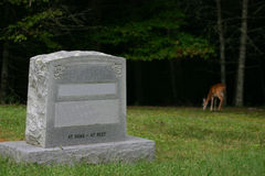 A deer at the grave. Yard, with an gravestone in the front royalty free stock images