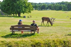 Deer grazing in the park stock image