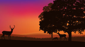 Deer grazing at sunset under trees Royalty Free Stock Photo