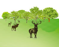 Deer in green countryside Royalty Free Stock Photos
