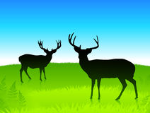 Deer in the green field with blue sky background. Deer in the green field with blue sky background Stock Photography