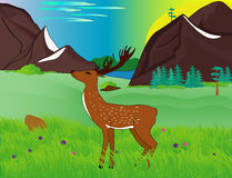 Deer among green meadows in the mountains Stock Photo