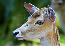 The deer head Stock Photo