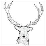 Deer head Stock Image