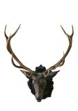Deer head with antlers Royalty Free Stock Photo
