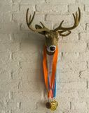 Deer head with antlers hanging on a white brick wall, deer with sport medals around its neck. A deer head with antlers hanging on a white brick wall, deer with stock image