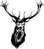 Deer head Royalty Free Stock Images