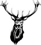Deer head. With antlers , illustration royalty free illustration