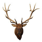 Deer Head. With beautiful antlers isolated on white background royalty free stock photo