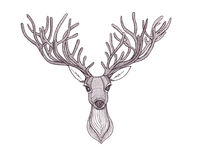 Deer head. Beautiful horns. speaking look.  Stock Image