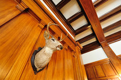 deer head in castle stock photography