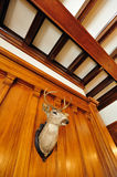 Deer head in castle Royalty Free Stock Images