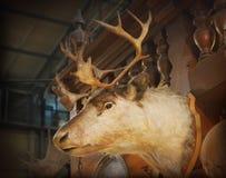 Deer head. Close up of deer head stock photo