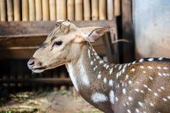 deer head cut antler Stock Photography