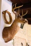 Deer head decoration Royalty Free Stock Photos