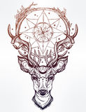 Deer head and dream catcher. Royalty Free Stock Image