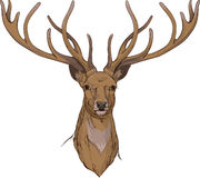 Deer head with horns Stock Photography