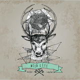 Deer head and horns face. Log. Template for business or t-shirt design. Vector Vintage hand drawn Design Element Royalty Free Stock Photo