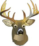 DEER HEAD Royalty Free Stock Photos