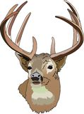 DEER HEAD Stock Images