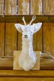 Deer head Stock Photography