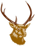 Deer head profile Stock Photo