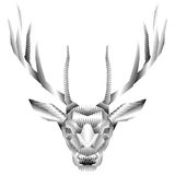 Deer head. royalty free stock photography