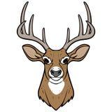 Deer Head Stock Photos