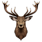 Deer head stock illustration