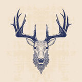 Deer head. Vintage hand drawn illustration Royalty Free Stock Images