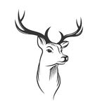 Deer head on white background Stock Photography
