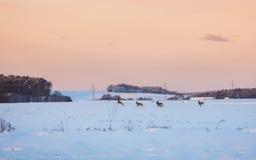 Deer herd on a meadow Stock Photos